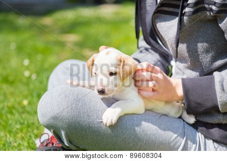 Mixed-breed cute little puppy in lap.