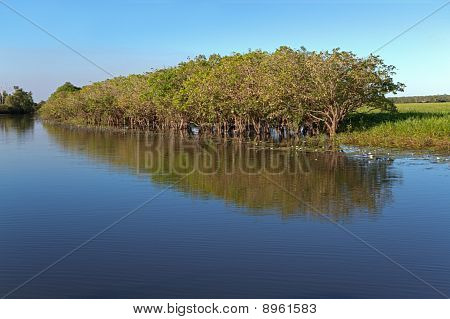 Trees With Reflections, Kakadu N/P