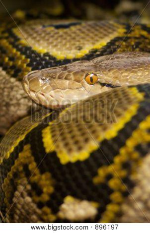 Colourful Python