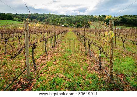 Autumn Wine Valley