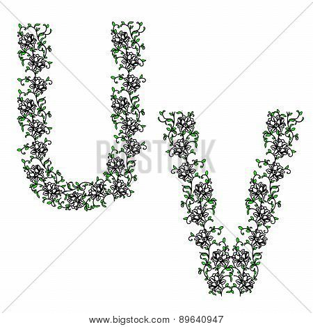 Hand drawing ornamental alphabet. Letter UV