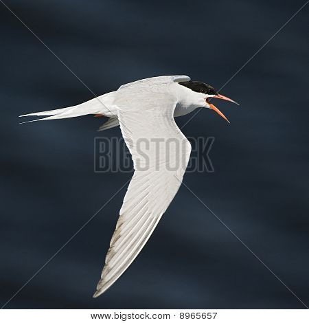 Flyingtern.