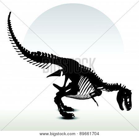 Dinosaurs Trex Skeleton
