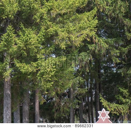 Jewish star with huge trees