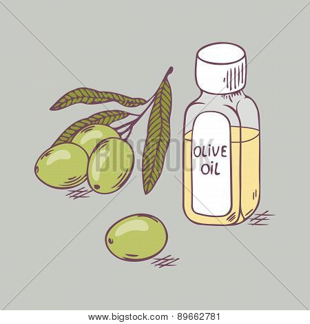 Olive oil in bottle with branch close up. Doodle illustration