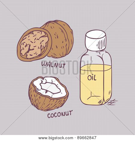 Healing coconut and walnut oils set in vector