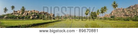 View of Hampi's boulder strewn landscape with rice paddies and palm trees