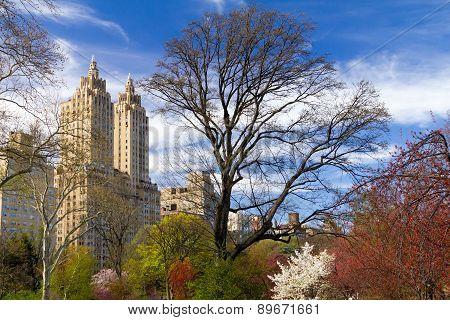 Spring Landscpe In Central Park New York