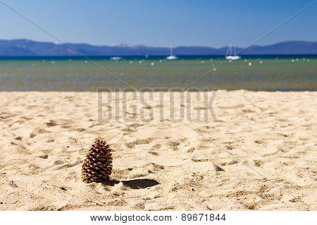 Pine Cone On Empty Beach