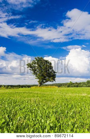 Field Landscape Plain Nature