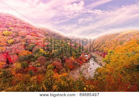 Beautiful Valley With Seasonal Colorful Trees And Blue Sky Landscape In Japan