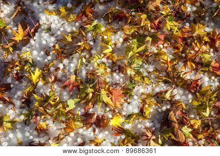 Autumn leaves and hail