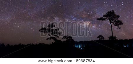 Silhouette of Tree and Milky Way. Long exposure photograph.