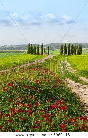 Tuscan Summer Landscape With Cypresses, The Road And Bright Red Flowers In The Foreground
