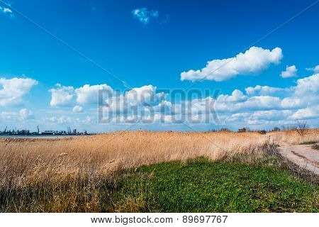 Country Road In The Reeds