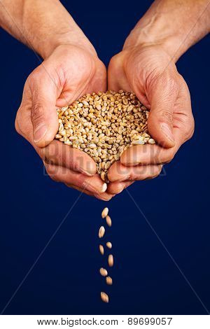 wheat dropping from farmer's hands