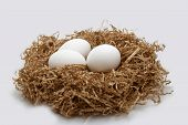 stock photo of nest-egg  - closeup of isolated nest with eggs on white background - JPG