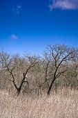 stock photo of forlorn  - Early spring in an old orchard on the hill - JPG