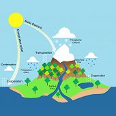 picture of transpiration  - Vector labelled illustration of water cycle in nature - JPG