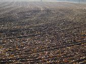 image of bohemia  - view sown fields southern Bohemia - JPG