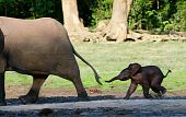picture of baby animal  - Africa - JPG