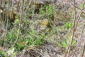 image of weed  - a rocky overgrown bank with trees and weeds - JPG