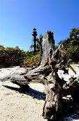 foto of driftwood  - A huge weathered driftwood log and stump lay on the fine sand of the beach with a silhouette of the Sanibel lighthouse in the background - JPG