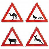 foto of deer family  - Collection of warning signs about camels ducks cattle and deer crossing the road in Germany - JPG