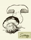 stock photo of mushroom  - Set of linear drawing mushrooms - JPG