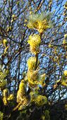 picture of cluster  - Catkin  - JPG