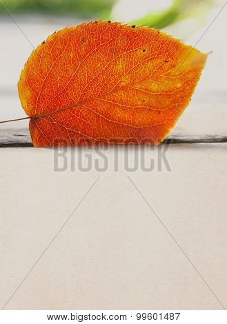 Orange Aspen Leaf Against Sunlight