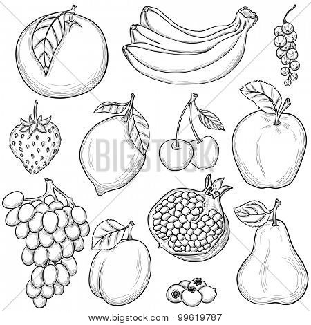 Set of sketched fruits isolated on white background