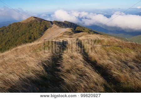 Autumn scenery in the mountains. The road in the dry grass. Carpathians. Ukraine. Europe
