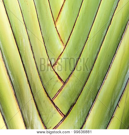 Details Of Palm Leaves