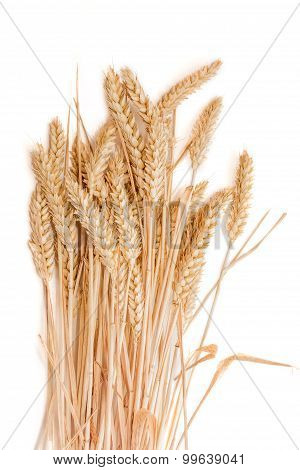 Sheaf Of Wheat Ears On A Light Background