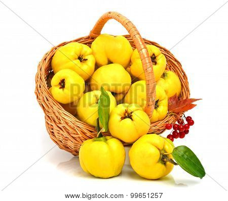 Quince In The Basket Isolated On White
