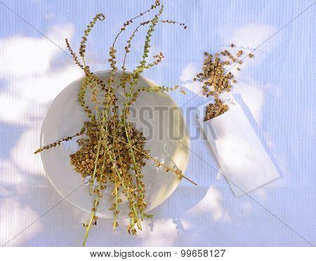 Seeds Of Chard