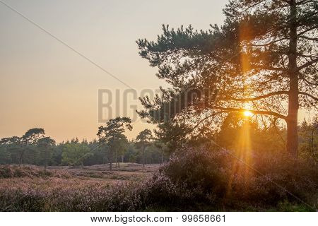 Bright Sun Flares Through Tree Branches