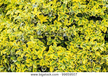 Colourful bush leaves. Close-up shot. Nature background.