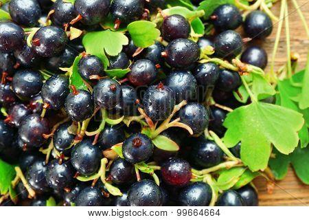 Pile of wet black currants, closeup