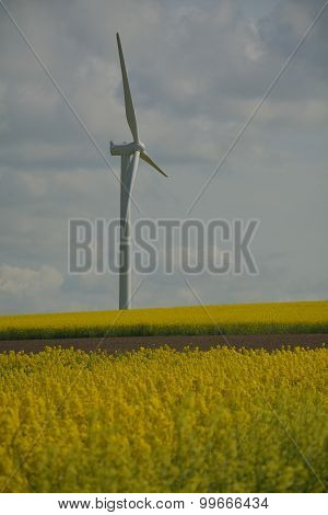 Eco Power, Wind Turbine
