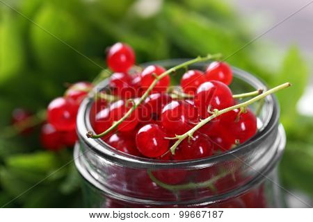 Fresh red currants in jar with mint close up