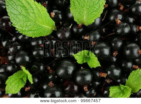 Ripe blackcurrant background