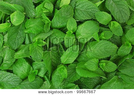 Green fresh leaves of mint close up