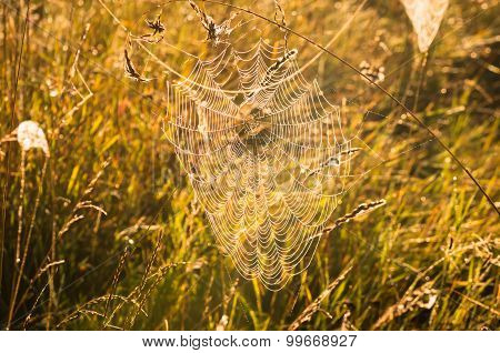 Indian Summer And Cobwebs