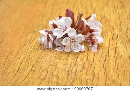 Flowers Of Prunus Cerasifera