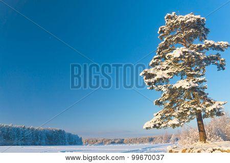 Frozen Nature Sunny Glow