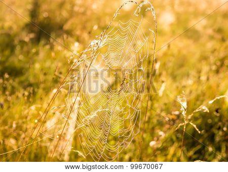 Indian Summer And Cobwebs
