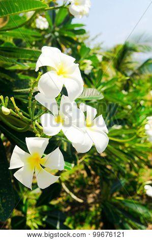 Idyllic Blossom Overgrown Hillside