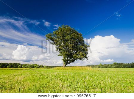 Lonely Tree Field Landscape